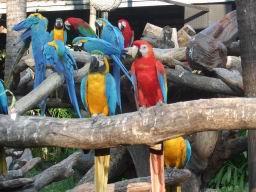 SafariWorldBangkokPictures441.JPG