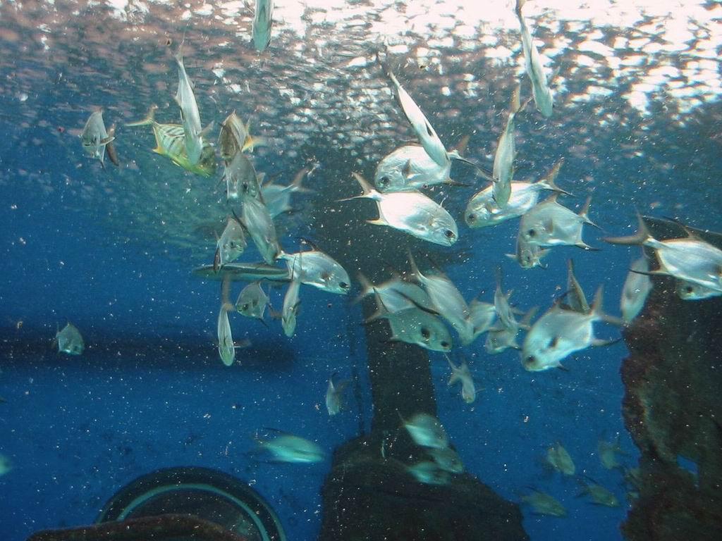 Underwater World Pattaya Pictures