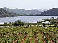 Vineyard Silverlake Pattaya